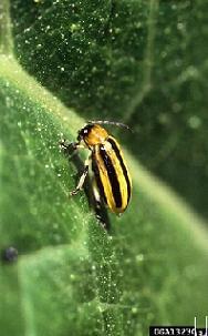 identify garden pests