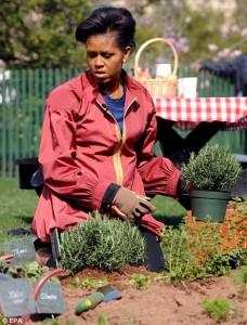 michele-obama-organic-garden