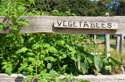 preparing vegetable garden