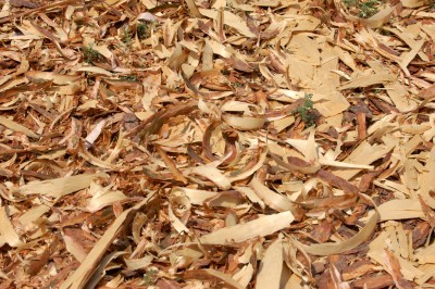 shredded mulch, sawdust mulch, wood chip