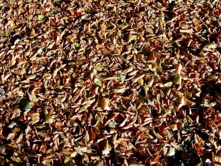 dry leaves mulch, shredded mulch, cedar mulch