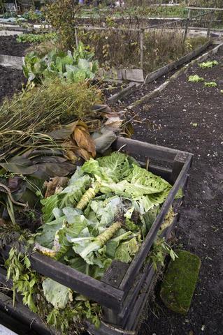 organic gardening compost pile